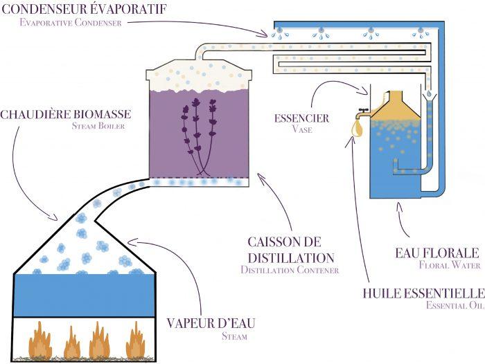 schéma de distillation à la vapeur d'eau